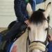 Riding-Fionn-150x150